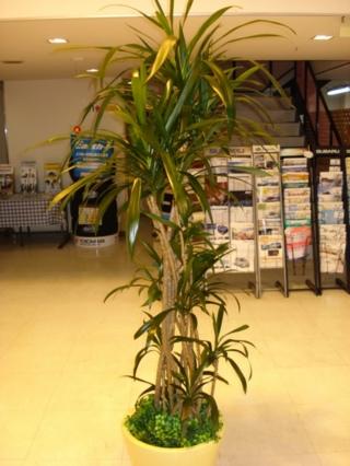 【店舗の装飾に】観葉植物