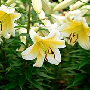 花束 お弔い 3