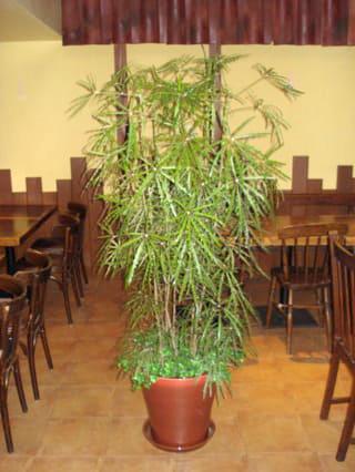 観葉植物 1