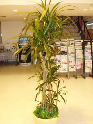 観葉植物 3